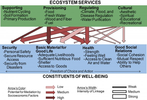 Biodiversity, Ecosystem Services, and Human Well-Being